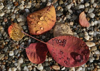 Macro Photography * 2nd Place * Pebbles Leaves Rain by Rona Kanpp