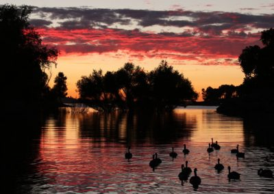 Folsom Outdoors * 3rd Place * Sunset Goose Cruise by Rona Knapp