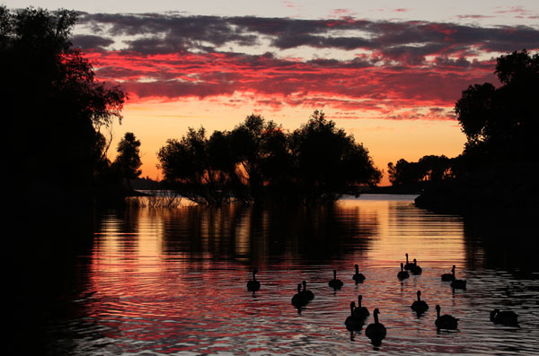 Sunset Goose Cruise by Rona Knapp