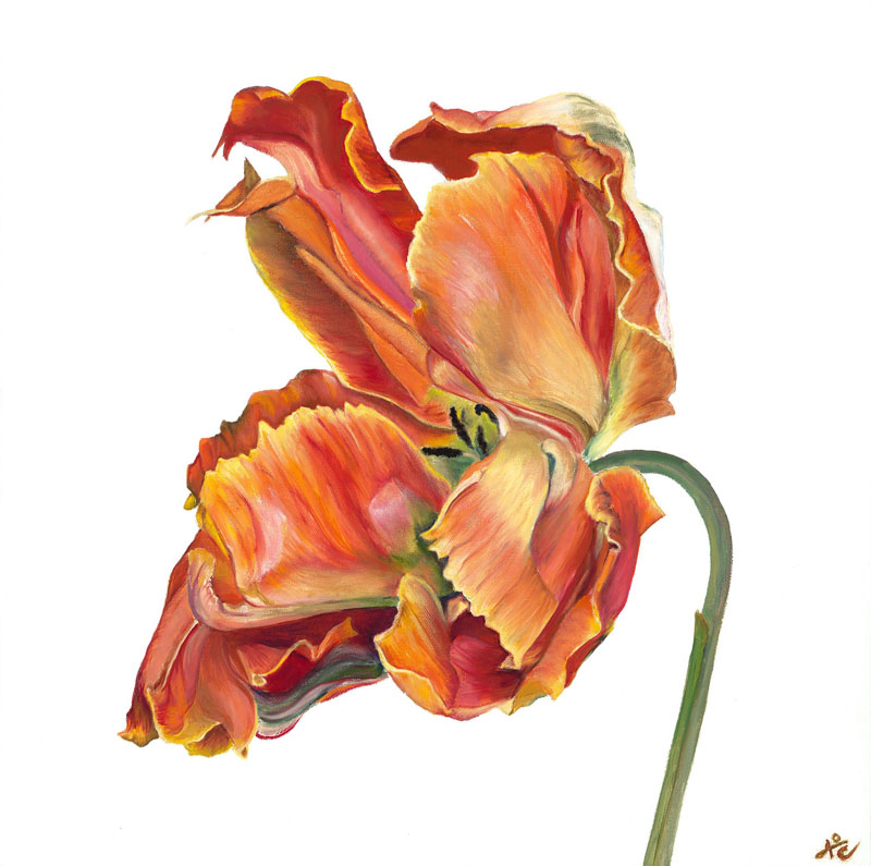Parrot Tulip by Annie O'Connell
