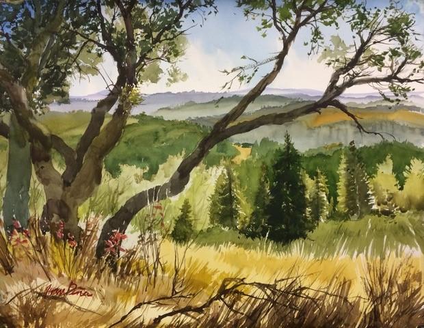 Oaks Overhang by Juan Pena