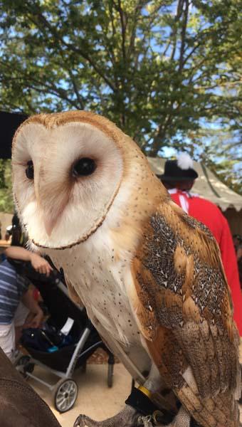 Owl at the Folsom Renaissance Faire by Elliot Rogin