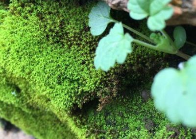 Macro Photography * Mossy Rock at Powerhouse by Paige Rogin
