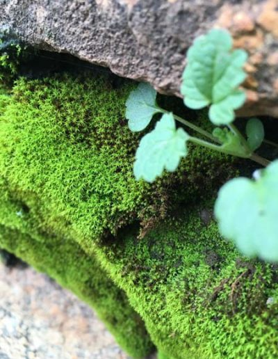 Mossy Rock at Powerhouse by Paige Rogin