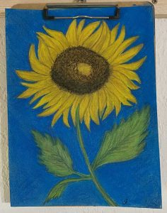 Sunflower (Pastel) by Jaci Young